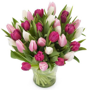 Tulpen love mix